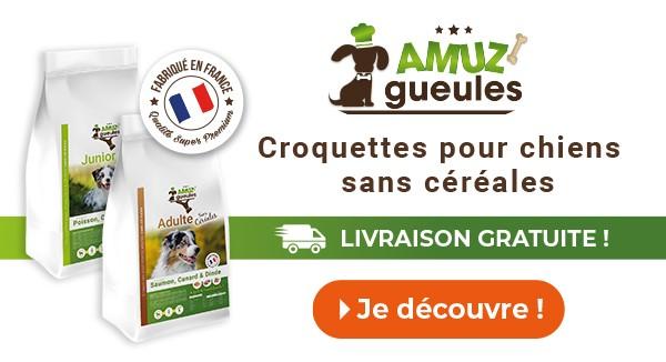 livraison à domicile de croquettes pour chiens